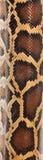 boa φίδι προτύπων στοκ φωτογραφία με δικαίωμα ελεύθερης χρήσης