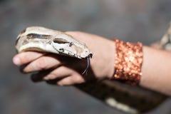 Boa φίδι στον άνθρωπο χεριών Στοκ εικόνα με δικαίωμα ελεύθερης χρήσης