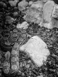Boa φίδι Στοκ Εικόνες