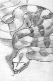 Boa constrictor pencil sketch Stock Images