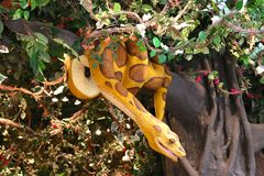 Boa Constrictor  At The Rainforest Cafe, Nashville Tennessee Royalty Free Stock Photography