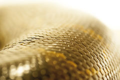 Boa constrictor scales Royalty Free Stock Photography