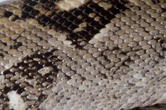Boa constrictor skin Stock Photography