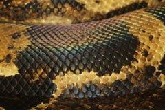 Boa constrictor snake skin Stock Photos