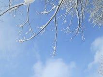 Céu azul do inverno bonito com neve na árvore imagens de stock