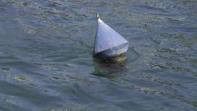 Boa nell'acqua corrente di un fiume archivi video