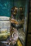 Boa peligrosa de la serpiente en terrario Fotografía de archivo