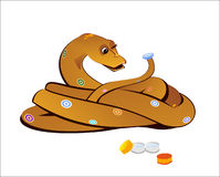 Boa puts lens. Boa constrictor with poor vision puts lens Royalty Free Stock Photo