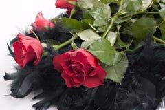 boa róże Zdjęcia Stock