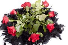 boa róże Zdjęcie Stock