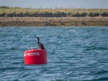 Boa rossa per gli yacht Flusso di Scapa, Orkney fotografie stock libere da diritti