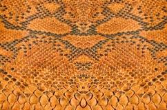 Boa skin texture. Golden pattern of spread boa skin Royalty Free Stock Photos