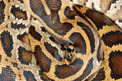 Boa snake pattern Stock Photos