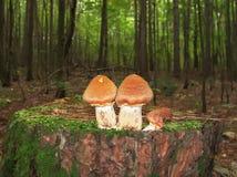 Boa vinda à floresta fotografia de stock