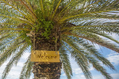 A BOA VINDA do sinal na palmeira Imagens de Stock Royalty Free