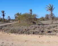 Boa Vista Imagenes de archivo