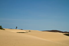 Boa Vista Dunes Royalty Free Stock Photography