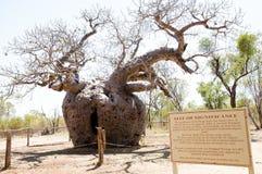 Boab监狱树-金伯利-澳大利亚 免版税库存图片