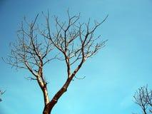 boab结构树 免版税库存照片