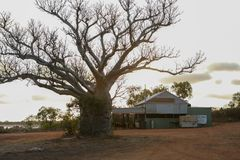 Boab tree and rustic camping shed or shelter at an old fishermans camp at Kalumburu, Western Australia stock photos