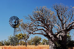 Boab tree and wind-wheel. In australia royalty free stock photography