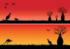 Boab trees and two kangaroos Stock Image
