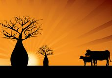 Boabbomen en twee koeien vector illustratie