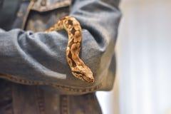 Boaen förestående, ormen förestående, mannen rymmer boaen royaltyfria foton