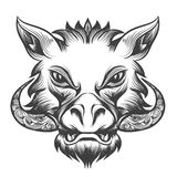 Boar head Stock Photography