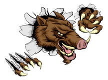 Boar mascot breaking through wall Stock Photo