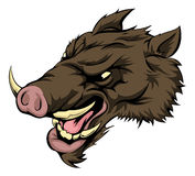 Boar mascot character. An illustration of a fierce boar animal character or sports mascot Royalty Free Stock Photography