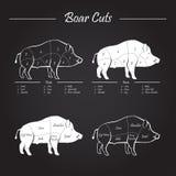 Boar meat cut diagram - elements blackboard Royalty Free Stock Images
