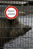 Boar prohibited feed Stock Photos