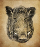 Boar on red background. Illustration in draw, sketch style. Royalty Free Stock Images
