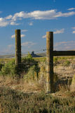 Boar's Tusk through Old Fence Royalty Free Stock Image