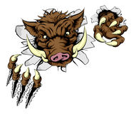 Boar sports mascot breaking wall Royalty Free Stock Photography