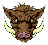 Boar sports mascot character Stock Images