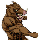 Boar sports mascot fighting Royalty Free Stock Images