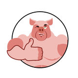 Boar thumbs up well and winks. Pig Signs all right. Cheerful boa Stock Photography