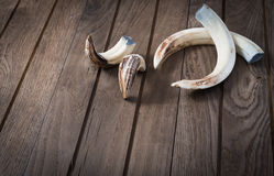 Boar tusk Royalty Free Stock Photography