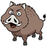 Boar. Vector illustration of Boar cartoon Royalty Free Stock Image