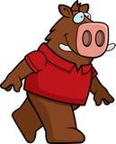 Boar Walking Royalty Free Stock Photo