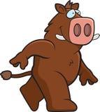 Boar Walking Royalty Free Stock Photography