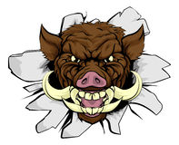 Boar Warthog Sports Mascot Royalty Free Stock Photo