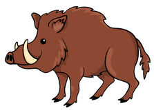 Boar  on white. Vector cartoon illustration Royalty Free Stock Images