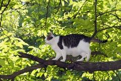 Boarcat on the tree Stock Photos