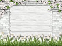 Board brick grass tulip background. White wooden sign nailed to the brick wall. Green grass, tulip flower and blossom tree branches in the foreground. Vector Royalty Free Stock Photos