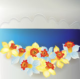 Board from daffodils Stock Images