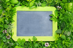 Board among herbs. A board for notes among a group of herbs Royalty Free Stock Photography