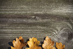 Board with oak leaves concept. Panel Royalty Free Stock Image